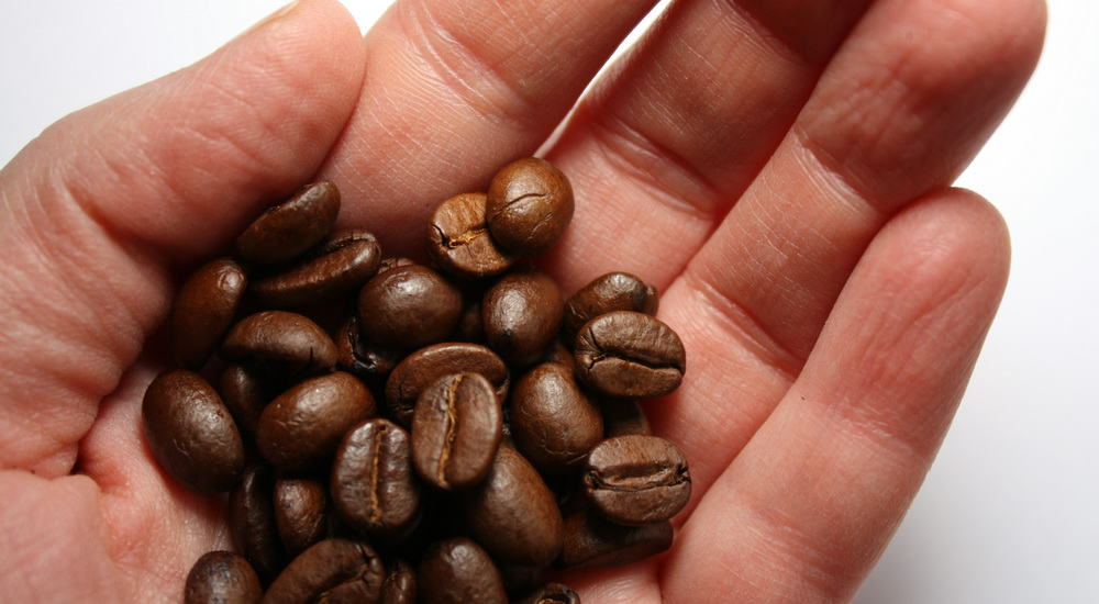coffee beans in the palm of a hand