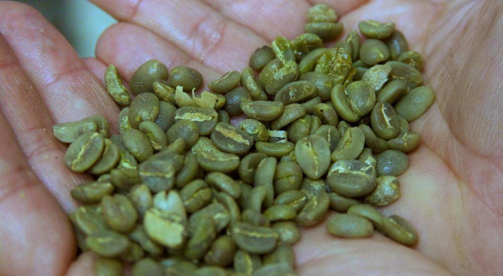 raw green coffee beans