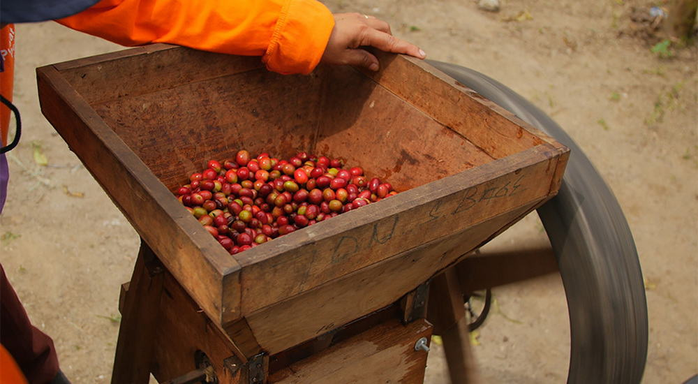 processing a box of coffee beans