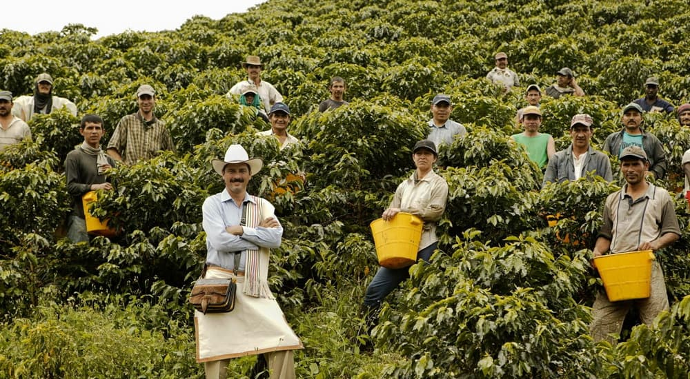 coffee farmers stood for photograph