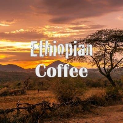 Ethiopian french press coffee
