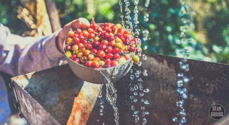 coffee processing methods